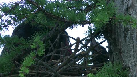 Bird Live Action