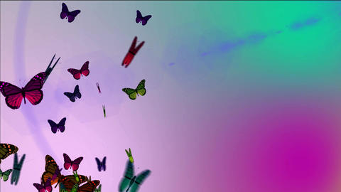 flying butterflyies on a beautiful background Animation