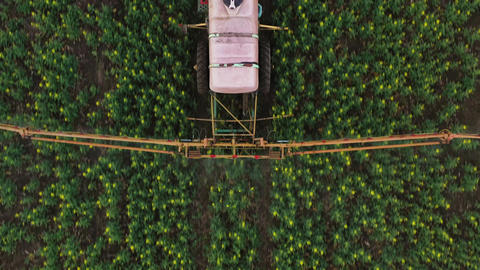 Top view of tractor treats agricultural plants on the field Footage