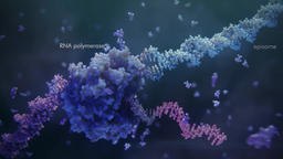 Method developed for the treatment of hereditary diseases , Gene Therapy Footage