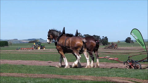 Ploughing with horses Footage