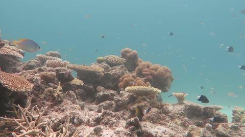 サンゴと熱帯魚02 Footage