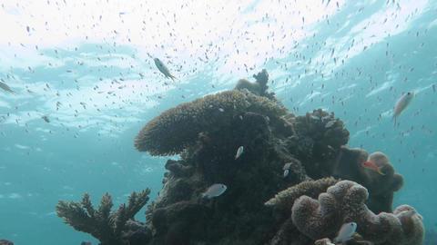珊瑚と水面06 Footage