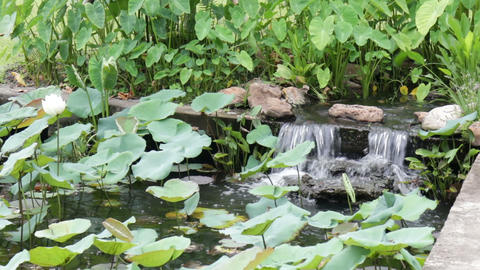 Garden waterfall in landscaped oriental garden Live Action