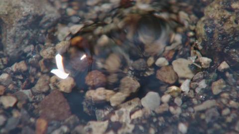 水が湧く所 湧き水 ビデオ