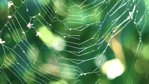 A web on a background of green forest Footage