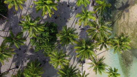 Tropical island paradise woman in bikini by palm trees drone aerial beach video Footage