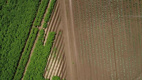 Agricultural sprinkler, field and plantation Live Action