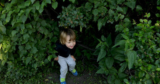 Happy small kid double over in laughter in green bushes Footage