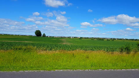 Camera Pan of Beautiful Lush Agricultural Farm Foliage With Traffic and Residential Homes in the Footage