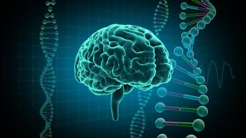 Brain Head 19 3 DNA D1gD 4k Animation