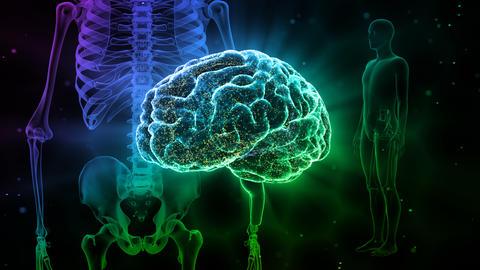 Brain Head 19 3 Medical A1bD 4k Animation