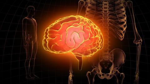 Brain Head 19 3 Medical A1dD 4k Videos animados