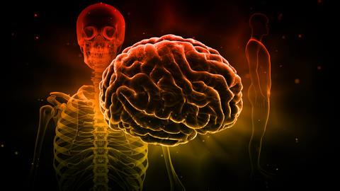 Brain Head 19 3 Medical B1bD 4k Animation