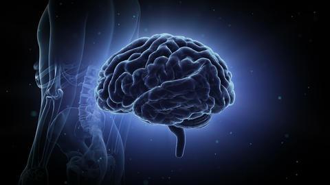 Brain Head 19 3 Medical C1bB 4k CG動画