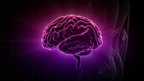 Brain Head 19 3 Medical C1gD 4k Animation
