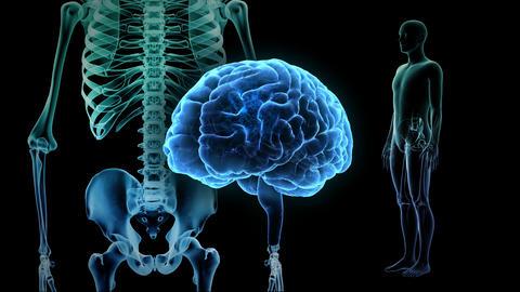 Brain Head 19 3 Medical D1bA2 4k Animation
