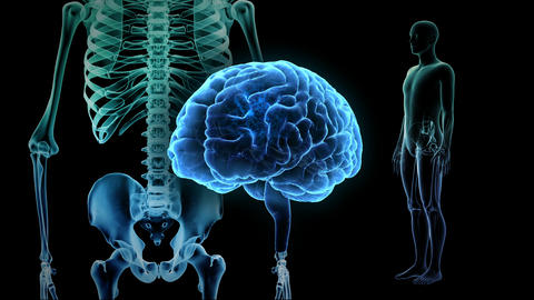 Brain Head 19 3 Medical D1bA2 4k CG動画