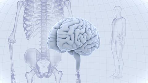 Brain Head 19 3 Medical D1dW 4k CG動画