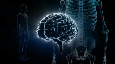 Brain Head 19 3 Medical D1bB 4k CG動画