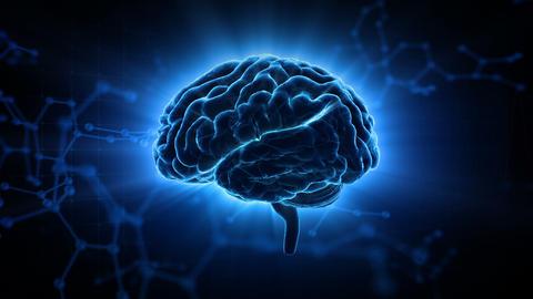 Brain Head 19 3 Molecular C1gB 4k CG動画