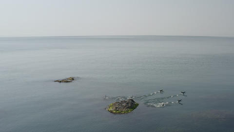 Calm sunny seascape. Small waves on sea surface. Flock ducks sitting on rocks protruding from sea. Footage