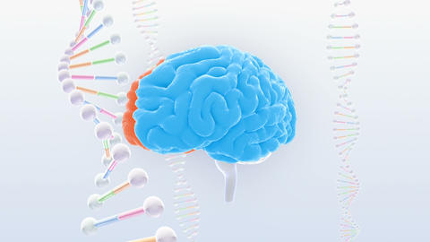 Brain Head 19 3 DNA A1bS2 4k Animation