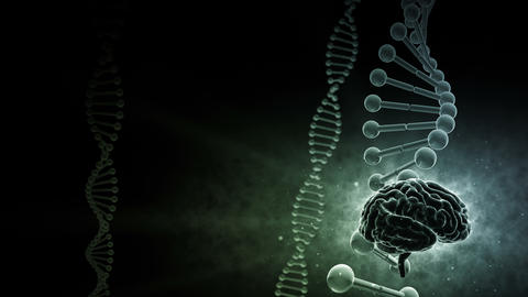 Brain Head 19 3 DNA A3bD 4k CG動画