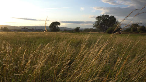 Meadow in golden sunset and wind Footage