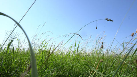 Meadow with tall grass pov GIF