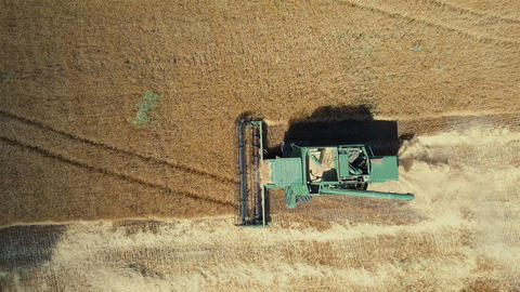 4K Aerial top view of Combine Harvester gathering wheat at sunset. Harvesting Live Action