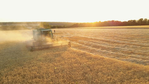 4K Aerial view of Combine Harvester gathering wheat at sunset. Harvesting grain Live Action