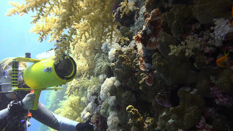 Underwater videographer, filming the Scorpion fish in the reef Elphinstone. Divi Live Action