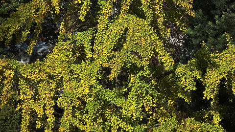 Green vegetation. Background. Flowers, grass and shrubs Footage