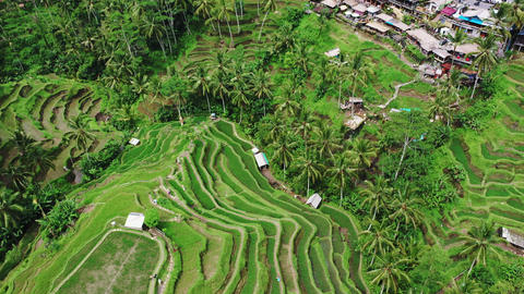 Beautiful rice terraces view from top. shoot with Drone on a sunny day Footage