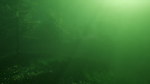 Magical Forest with Sparkles Footage