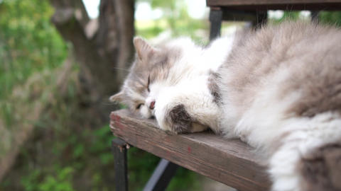 Pretty grey and white cat sleeping on a wooden counter in a yard in slow motion Live Action