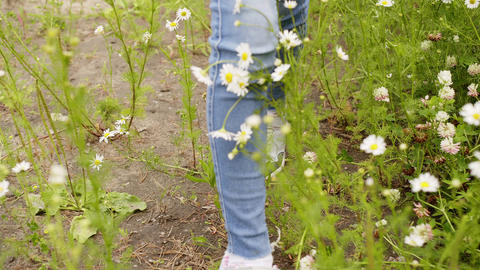 Female legs in sneakers walking on daisy field at summer day. Young woman Footage