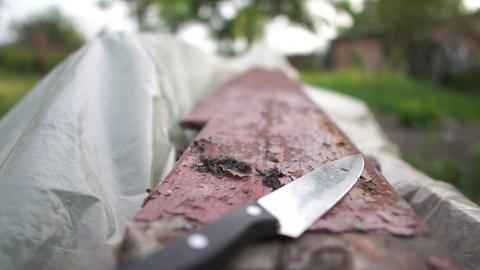 Home penknife lying on a rundown wooden board in a yard in summer in slow motion Footage