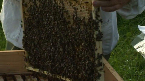 Bees in the hive 1 Stock Video Footage