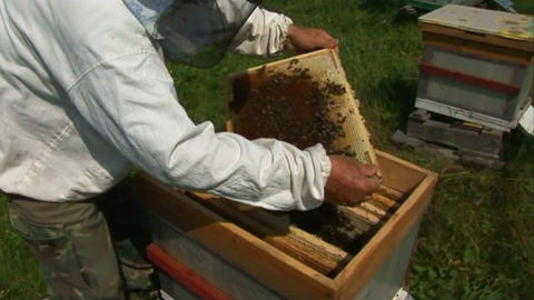 Bees in the hive 3 Stock Video Footage