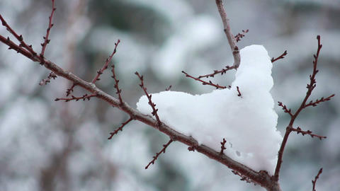 Snow on the branches 1 Stock Video Footage