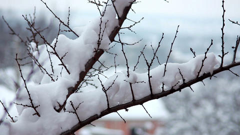 Snow on the branches 3 Footage