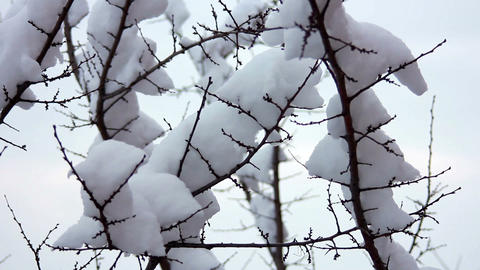 Snow on the branches 5 Stock Video Footage