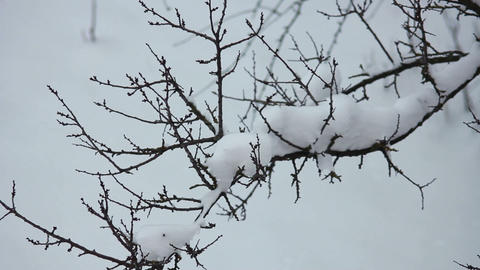 Snow on the branches 7 Stock Video Footage
