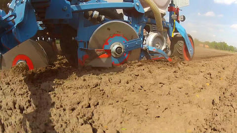 Closeup during the planting of maize Footage