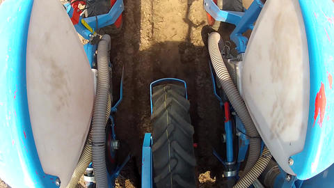 Planting maize for fodder or food, Closeup Footage