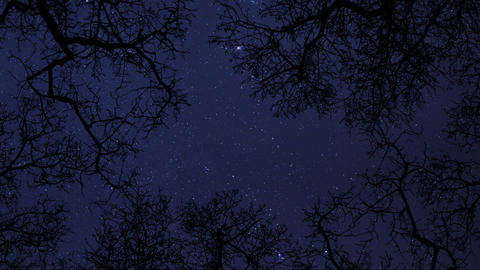night sky stars between trees time lapse 10856 Footage
