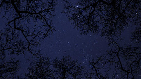 night sky stars between trees time lapse 10856 Stock Video Footage