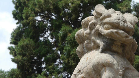 China Stone lion relying cypress tree Stock Video Footage